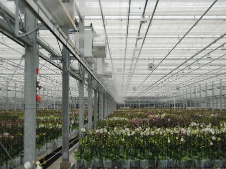High pressure fog system, Luiten-Greenhouses 2019